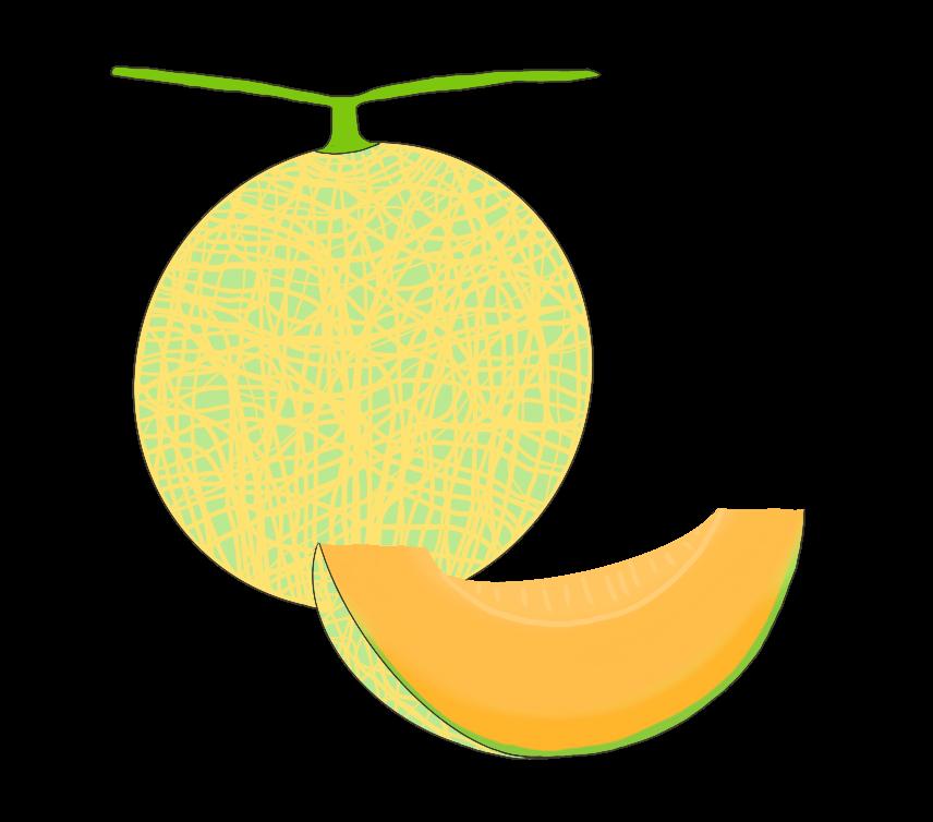 オレンジ色の果肉メロンのイラスト