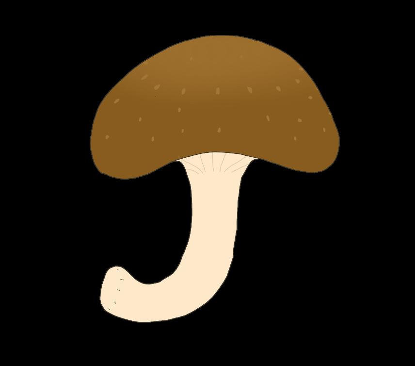 椎茸のイラスト