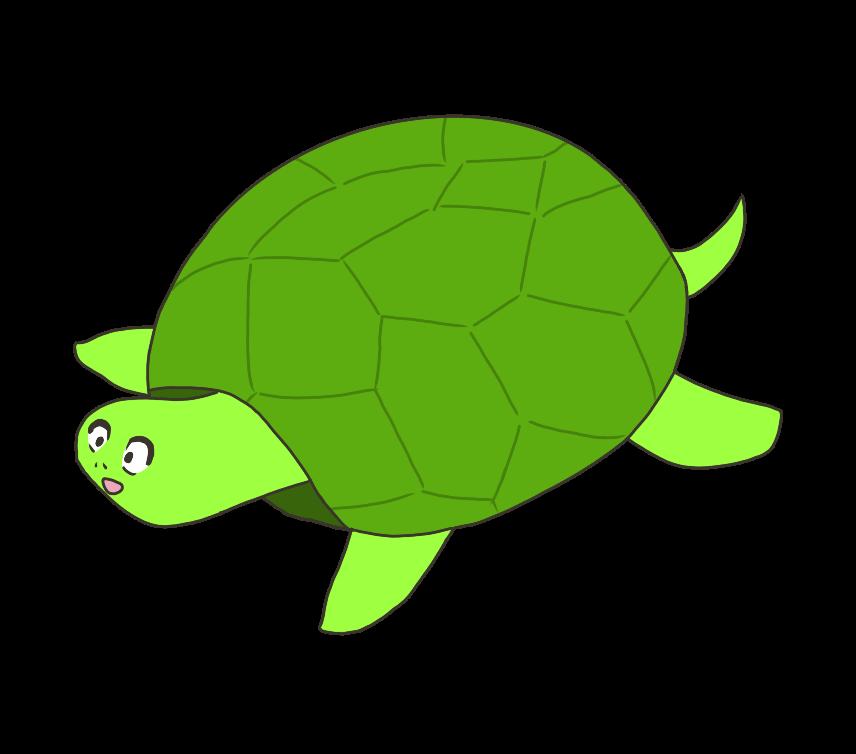 亀(かめ)のイラスト